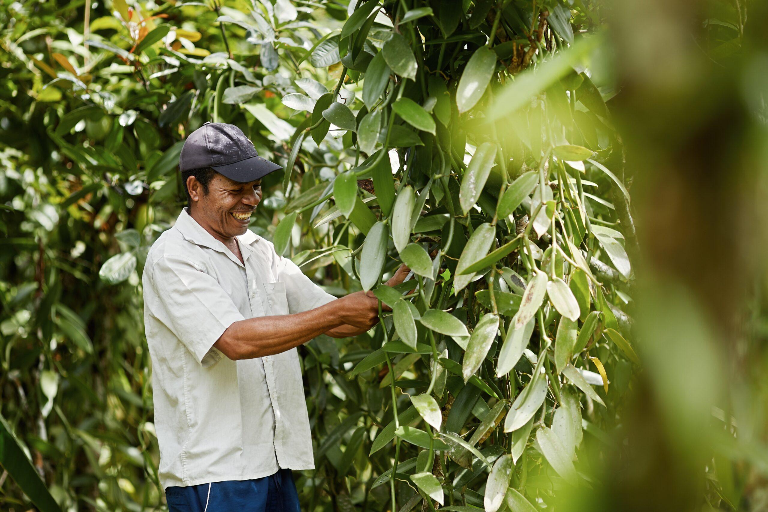 Norohy engages avec les producteurs de vanille